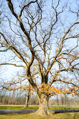 Tree (Oomphoto - Nancy G. Villarroya) Tags: trees branches treetrunk bigtree twigs niagaraonthelake talltree hugetree dsc94235
