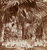 """Inside the Palm House, Kew Gardens, 1860s - stereoview (animated 3D effect) • <a style=""""font-size:0.8em;"""" href=""""http://www.flickr.com/photos/24469639@N00/8599358894/"""" target=""""_blank"""">View on Flickr</a>"""