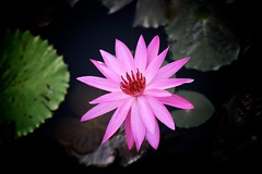 Pink Lilly (brianfarrell) Tags: ocean sea bali indonesia relax march surf peace lot wave serene relaxed tranquil tanahlot tanah 2013
