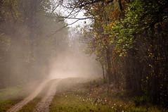 Nagzira (iamShishir) Tags: india wildlife jungle maharashtra lore nagzira gondia junglelore nagzirajunglelore
