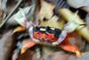 costarica2013_crab01