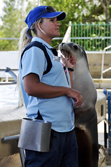 Duo (Roving I) Tags: tourism animals australia trainers entertainment nsw newsouthwales attractions coffsharbour furseals coffscoast marinemagic