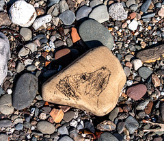 Dog on a stone (2) (allybeag) Tags: dog beach stone sketch drawing seacoal