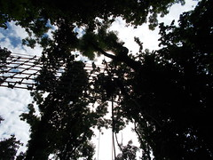 Csillebrc (Ferencdiak) Tags: budapest climbing mszs ktl erd fk trees buda hills
