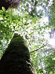 Forest (nikolkaa) Tags: tree sun rays picmonkey
