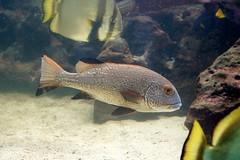 Aquarium - Wilhelma