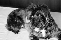 #photo #photography #photooftheday #photoofday #photooftoday #nikon #nikonphotography #dog #littledog #perro #ipadpro #apple #applepencil #photoshop #photoshopcc #enlight #enlightapp (Adrián Lahoz) Tags: enlightapp photo photography photooftheday photoofday photooftoday nikon nikonphotography dog littledog perro ipadpro apple applepencil photoshop photoshopcc enlight
