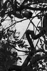 vale do anhangaba, sp (Th. C. Photo) Tags: vale anhangaba valedoanhangaba sp centro downtown downtownsp pretoebranco blackandwhite pb bw street streetphotography streetphoto streetphotographysp photography fotografia rua fotografiaderua