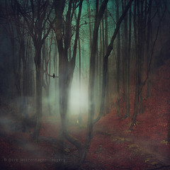 dont lose your way (Dyrk.Wyst) Tags: 2016 atmosphere bach baretrees bume colors creek deutschland dog fog forest germany hund landscape landschaft leaves licht mood natur nature nebel outdoor person photoshelter rain stimmung trees wald walker wasser water wet winter woodland wuppertal spooky fairytale grimm textures backlight ominous manipulation story square foggy surreal
