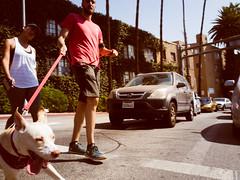 Dog Walker (torito_de_lana) Tags: california hollywood hollywoodhighland dog dogwalker street leash ricohgr ricoh