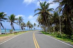 Curva na Estrada (leal.fellipe) Tags: sanandres colmbia mardocaribe caribe nikon nikond7000 coqueiro mar