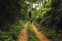 Man and Nature (Marl1) Tags: man people path nature green grass forest trees winter travel naturallight natural