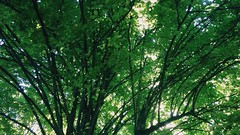 (camillep3) Tags: green very nature arbre