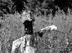Haute Couture Scarecrow two (Jade Chanoquaway) Tags: nikon nikkor d5500 blackandwhite black white grey gray grayscale greyscale bw contrast light shadow monochrome shadows outdoor outside outdoors nature tree trees leaves leaf forest foliage plant plants field fields meadow meadows sun flower flowers bud buds bloom blooms petal petals texture scarecrow fall september autumn canada ontario silhouette cans2s