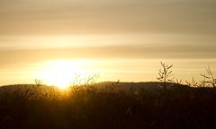 Sunrise (JSR-Photography) Tags: sun sunrise morning bright rapeseed harvest sky