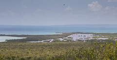 253A6957 (Global Wildlife Conservation) Tags: caribbean hellshire hellshirehills jamaica portlandbight threatened