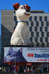 Secret Life of Pets / Warsaw (Images George Rex) Tags: warsaw pl dog giantdog max secretlifeofpets photobygeorgerex imagesgeorgerex poland warszawa marszakowska advertising terrier jackrussell