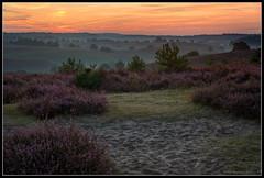 Posbank (Robbez) Tags: posbank veluwe heide morninglight