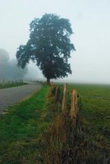 HFF (FrauN.ausD.) Tags: happyfencedfriday delmenhorst deutschland niedersachsen zaun baum landschaft nebel outdoor germany fog fence tree fall autumn herbst