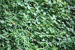 Leaves / () (TANAKA Juuyoh ()) Tags:  leaf green 5d markii hi high res hires resolution   chiba sakura