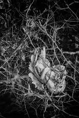 pawn (gregniel) Tags: deamon hell heaven gen elliott artist