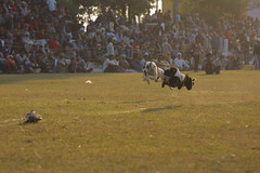 Flying Dogs (Ajit Pal Singh) Tags: two horses dog india tractor game history sports sport festival youth race rural speed photo dance high war colorful village bullock action folk bare events traditional religion culture mini games event riding winner vehicle warrior effort tug olympics sikh cart agriculture punjab popular schedule kila sponsor bravery agricultural daredevil stunt bhangra deliver courage gallop daring gallary implements ludhiana compete galloping quila sportsfestival footed grewal kabbadi qilla raipur giddha kilaraipur ruralsports tractive kilaraipursportsfestival