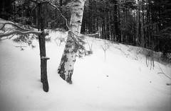 Thirteen (Denis Chernov (dip_c)) Tags: trees winter bw snow film 35mm pentax lucky f2 pentaxmesuper v500 luckyshd100 mir24 vyshgorod pentaxart