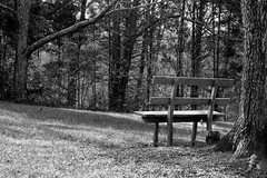 If a tree falls, and nobody is around... (Dan:Brown) Tags: bw yard bench aperture nikon keswick d7000 18200mmf3556gafs