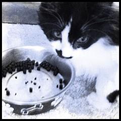 piglet kitten sad face (merrickball) Tags: cat square kitten squareformat finnegan stinks iphoneography instagramapp uploaded:by=instagram foursquare:venue=4bd48211637ba593f5ccf470