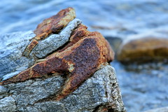 Rusty rocks (MaineIslandGirl) Tags: new england island bay maine newengland coastal penobscot islesboro midcoast