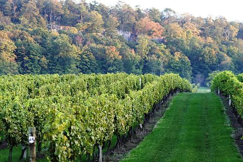 Cave_Spring_vineyard