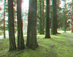 IMG_5168ForestTrees (EdwardMitchell) Tags: red canon lumix stereoscopic 3d spokane cyan anaglyph powershot sx1 gh2