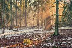 Winter Sun (ill-padrino www.matthiashaker.com) Tags: morning trees winter sun mist cold fog forest woods warm mood rays wald enchanted