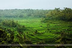 Coffee Plantation, Bali, Indonesia (Seven Seconds Before Sunrise) Tags: travel bali green indonesia asia southeastasia coffeeplantation nongan