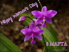 8 MAPTA  (8th of March) - International Women's Day (Tatters:)) Tags: orchid home droplets postcard australia orchidaceae qld purpleflowers pinkflowers spathoglottis spathoglottisplicata epidendroideae spatoglottis 8marchflower