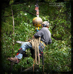 Work (Harry Lipson) Tags: trees up work crane chainsaw hanging worker suspended dangling bluecollar uplifting roped treesurgeon harrylipsoniii harrylipson harryshotscom harrylipson3