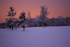 Distance (JT.Photography) Tags: blue trees winter summer sky snow colour closeup canon landscape march spring flickr bangor northernireland now flickrpro codown flickraward canon600d