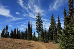 nice sky (fly flipper) Tags: bluemountains mtmisery asotincounty umatillanationalforest mtmiserytrail