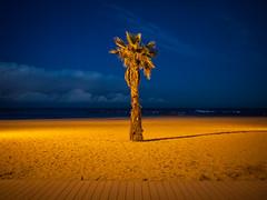 1 Tree @ Barcelona
