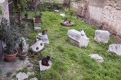Cat Sanctuary, Torre Argentina (new folder) Tags: italy rome roma architecture cat ruins torreargentina catsanctuary