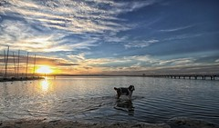 Model (pominoz) Tags: sunset dog lake clouds nsw centralcoast longjetty