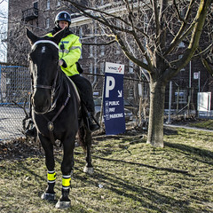 Engel and Winston II (Ben Roffelsen) Tags: horse toronto liberty village police mounted rider winston officer equine unit blogto engle torontoist