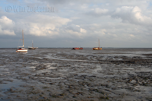 Stranded on the Mudflats