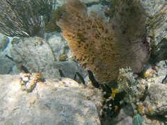 Cowfish and fan coral (Cory Hames) Tags: stjohn virginislands