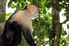 costarica2013_monkey02
