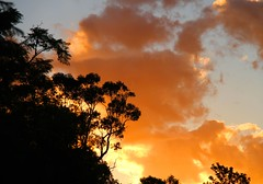 Orange coloured sky (loobyloo55) Tags: blue trees sunset orange clouds gum australia