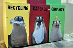 Seal of approval (Roving I) Tags: signs animals trash wildlife australia images nsw rubbish newsouthwales recycling attractions coffsharbour furseals coffscoast dolphinmarinemagic