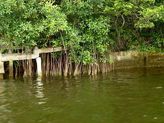 Mangroves - Cte d'Ivoire (UNEP Disasters & Conflicts) Tags: environment climatechange ctedivoire unep environmentalassessment unitednationsenvironmentprogramme unepmission uneppostconflictenvironmentalassessment environmentalexperts hotil
