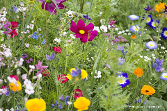 Wild Things (pedschwork.fotodesign) Tags: blumen blossom flowers blten city stadt farbe bunt