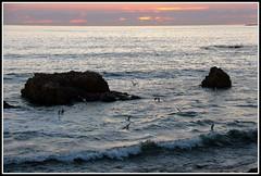 Crpuscule sur l'le de Noirmoutier (Les photos de LN) Tags: paysage crpuscule ledenoirmoutier rochers ocanatlantique mouettes mare vagues lumire ciel couleurs